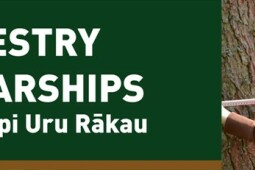 Forestry Scholarships 2019