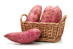Learn How to Grow Kumara